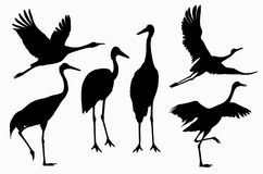 Six shadows of cranes action. On white background Stock Photography