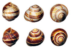 Six shells samples. Shells different views, collection of shells Stock Photography