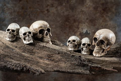 Six skull on wood. Still life photography : six of mini size skull on decay wood on grunge background Royalty Free Stock Images