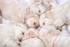Six small cute dog puppy Stock Photo