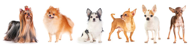 Six small dog Stock Images
