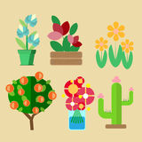 Six species of domestic cultivated plants Royalty Free Stock Photography