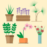 Six species of domestic cultivated plants Stock Photo