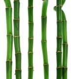 Six stems of bamboo. Against white background Royalty Free Stock Photos