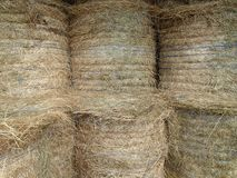 Six Stored Hay Bales with Blue String. Photography Stock Photography