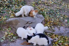 six stray cats eating in park royalty free stock image