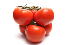 Six Tomatoes. On white background Royalty Free Stock Images
