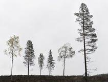 Six trees Stock Image
