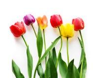 Six tulipes Images libres de droits