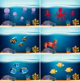Six underwater scenes with different sea animals. Illustration Royalty Free Stock Photography