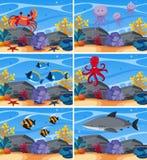 Six underwater scenes with sea animals Stock Photos