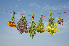 Six various medical herbs bunches on clothes string Stock Photo