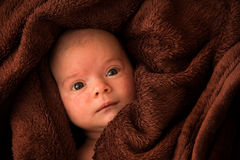Six weeks old baby girl lying and hiding in brown blanket Royalty Free Stock Image