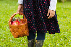 Six-Year Girl In Sundress With Picture Hold Wicker Basket With Ripe Apples On Grass In Garden. Royalty Free Stock Image