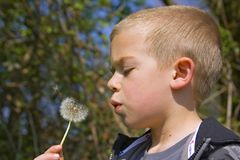 Six year old boy blowing a dandelion Stock Photos