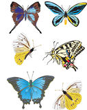 Six yellow and blue butterflies Stock Images