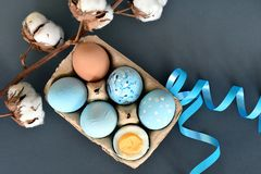 Sixpack of colored Decorated Easter eggs on the dark blue background with cotton branch stock images