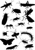 Sixteen black insects Royalty Free Stock Photos