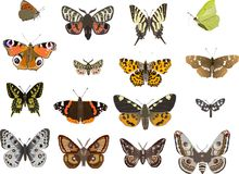 Sixteen butterflies Royalty Free Stock Image