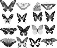 Sixteen gray butterflies Stock Images