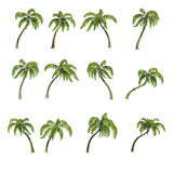 Sixteen palm trees, 3D render. Collection various palm trees isolated on white background, 3D render, clipping path included Stock Photos