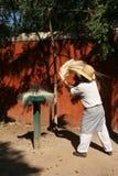 Sizal plantacja, Merida/, Meksyk Zdjęcia Royalty Free