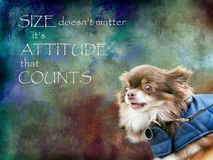 Size doesn`t matter, it`s attitude that counts. Chihuahua composite. Inspirational, motivational poster featuring cute small dog Stock Images