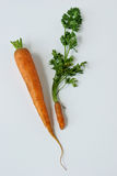 Size still isn't everything. Two carrots compare notes on size royalty free stock photography