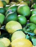 Sizilianische grüne Zitronen, kleine Schärfentiefe Stockfoto