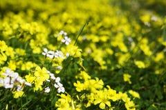 Sizilianischer Frühling Stockbild