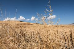 Sizilianisches Land 2 Stockbild