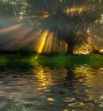 Själv-reflexion som studsar perfekt från grodan Fotografering för Bildbyråer