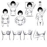 Självexamen, bröstcancerundersökning stock illustrationer