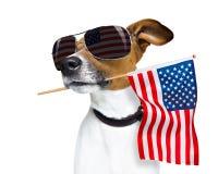 Självständighetsdagen 4th av den juli hunden Royaltyfri Fotografi