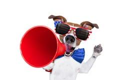 Självständighetsdagen 4th av den juli hunden Royaltyfria Bilder