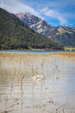 Sjö Achensee i Tirol Royaltyfri Fotografi
