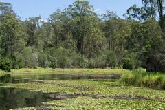 Sjö av D'anguilar nationalpark 4 Arkivfoto