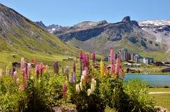 Sjö av Tignes och blommor i Frankrike Fotografering för Bildbyråer
