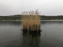Sjö Averno - Canneto isolerade Fotografering för Bildbyråer