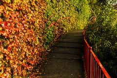 Sjö Como, Italien rött staket royaltyfri bild