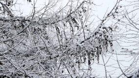 Sjö-effekt för tungt snöfall snö stock video