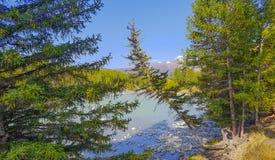 Sjö för bergAltai berg Arkivbilder