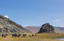 Sjö för bergAltai berg Arkivbild