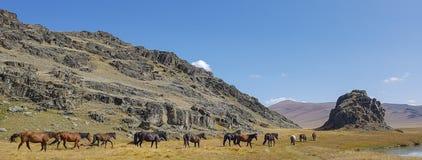 Sjö för bergAltai berg Arkivfoto