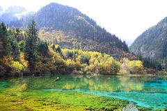 Sjö för fem blomma, Jiuzhaigou royaltyfri fotografi
