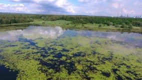 Sjö för sommartid och gräsplanskog, vitmoln över blå himmel i Polen lanscape lager videofilmer
