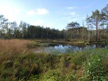 Sjö i den bavarian skogen med hed arkivbilder