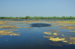 Sjö i Donaudeltan Royaltyfri Foto