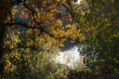 Sjö i en skog Arkivfoto