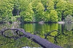 Sjö i en skog Royaltyfri Bild